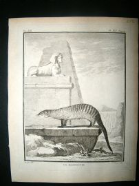Buffon: C1770 Mongoose, Antique Print